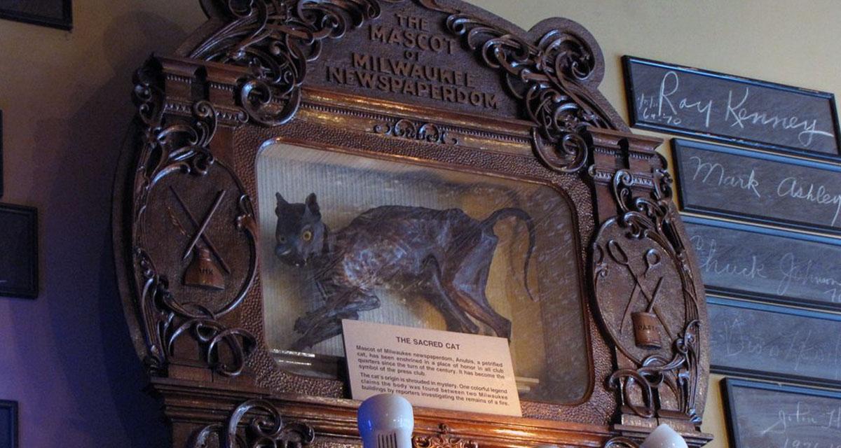 https://i2.wp.com/www.cultofweird.com/wp-content/uploads/2015/11/milwaukee-press-club-cat-lg.jpg