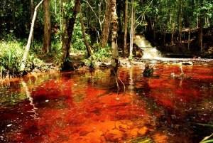 Cachoeira da Orquideas_Betho Feliciano