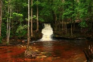 cachoeiraorquidea