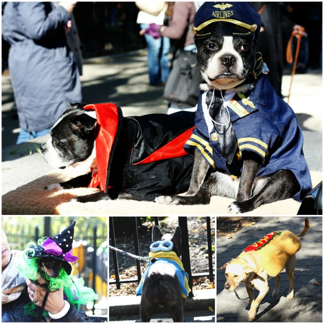 Halloween Dog Parade Collage 2