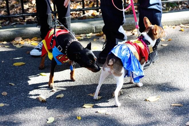 Super Dog and Wonder Dog