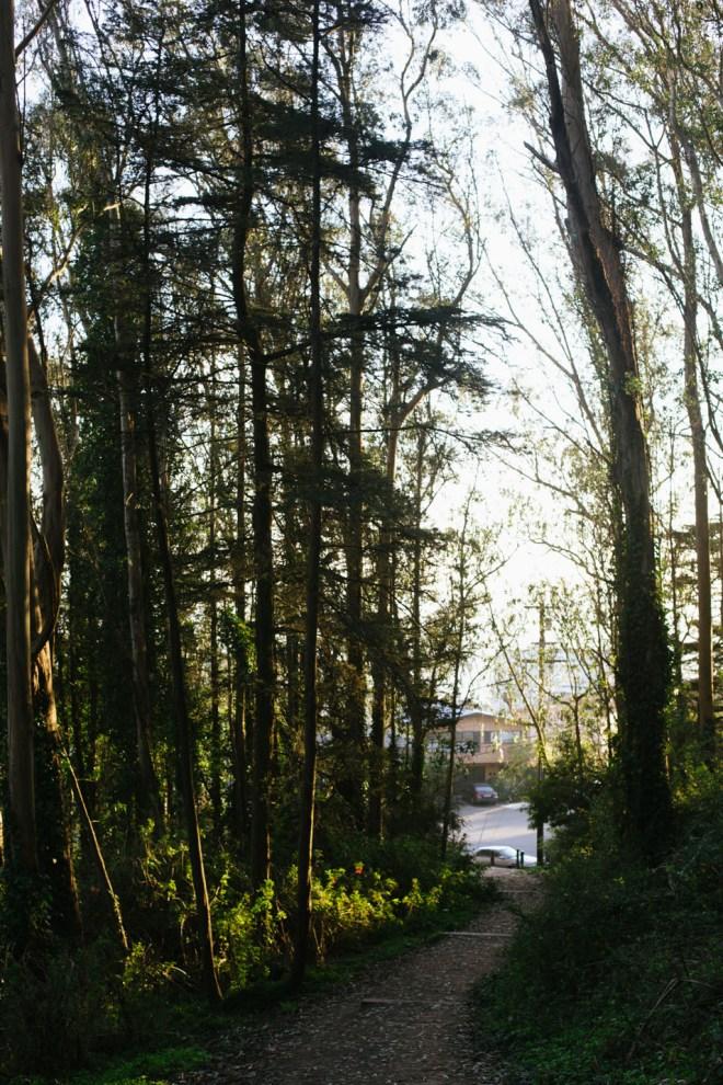 Mt. Davidson | Cultural Chromatics-10