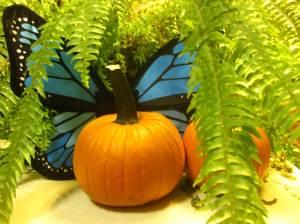 Pumpkin Butterfly