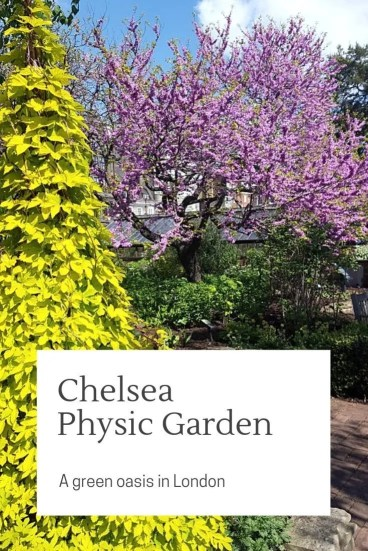 Chelsea Physic Garden, London garden filled with healing plants in the centre of London