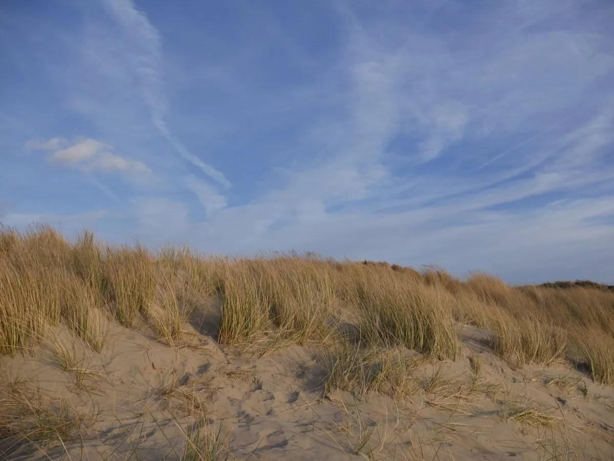 Sand dunes marram grass
