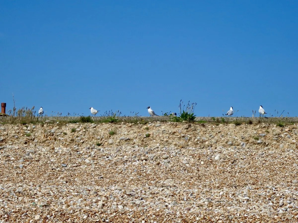 Birds on gravel bank with blue sky behind Kent