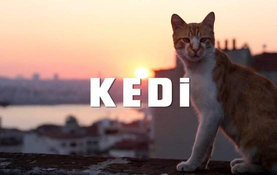 KEDI สารคดีตามติดชีวิตแมวแห่งอิสตันบูล| VIDEO OF THE WEEK