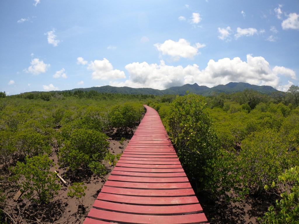 Mangroves Koh Chang
