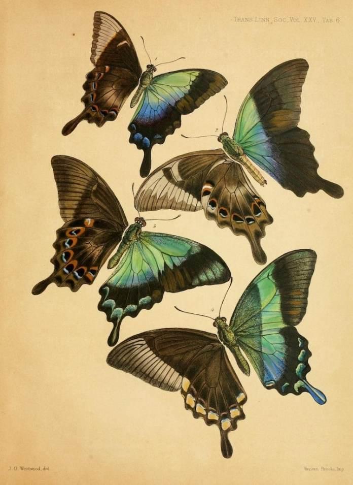 nature illustrations biodiversity heritage library 4