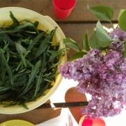 Roquette et lilas