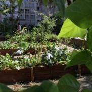 Le jardin Marcotte sous le soleil de juillet