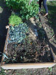 Paillage et engrais verts pour garder les bacs couverts pendant l'hiver