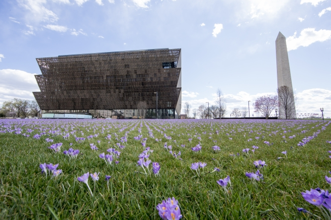 NMAAHC - crocus filled lawn - March 2016