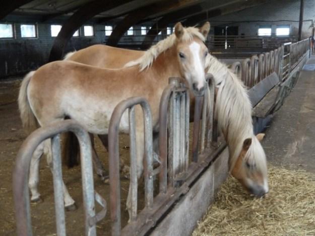 Nieuwveen bij Nieuwkoop, Riga Ranch, www.riganranch.nl