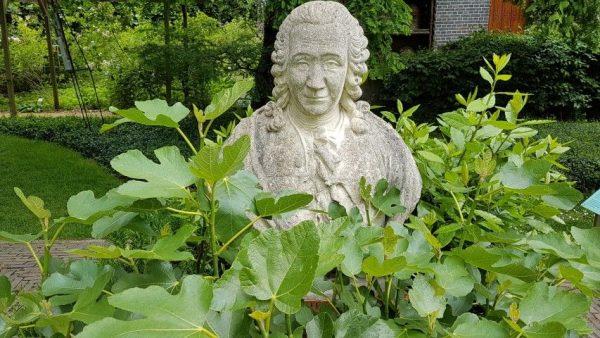 Borstbeeld van Linnaeus in Hortus Botanicus Leiden