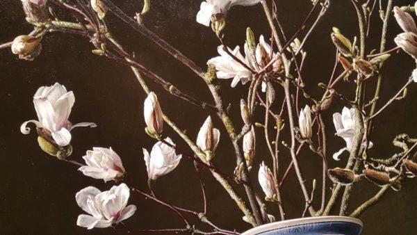 detail magnoliatakken