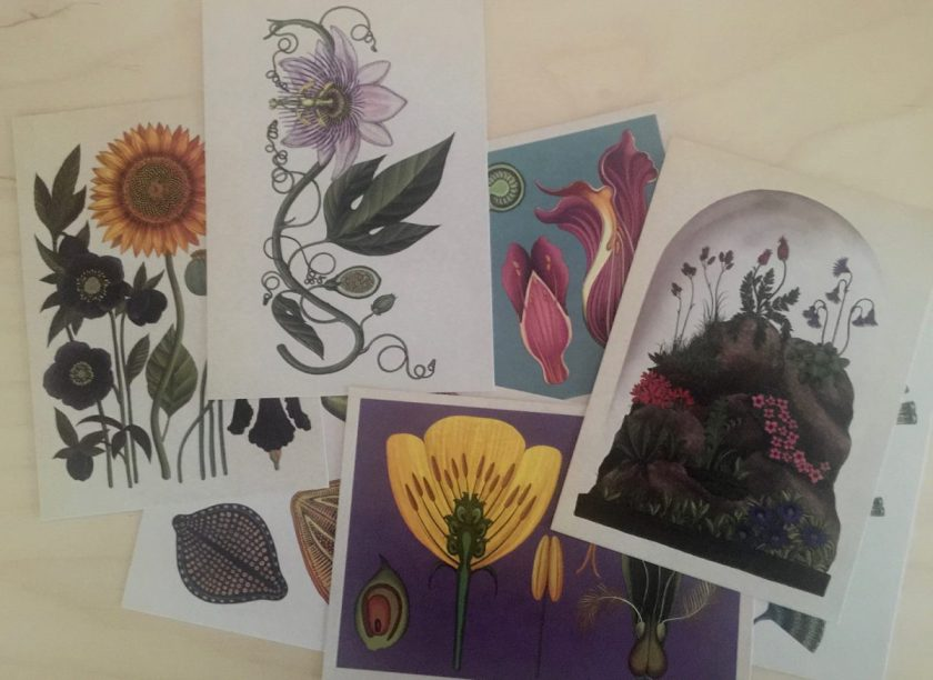 Box Boranicum Postcards met 50 blanco kaarten. Geïllustreerd door Katie Scott.
