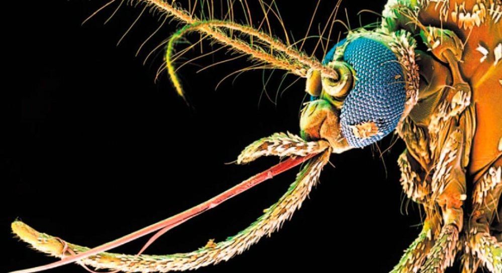 prevención Dengue semana santa 2019
