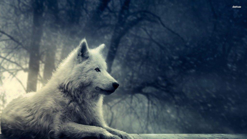 lupul alb 1