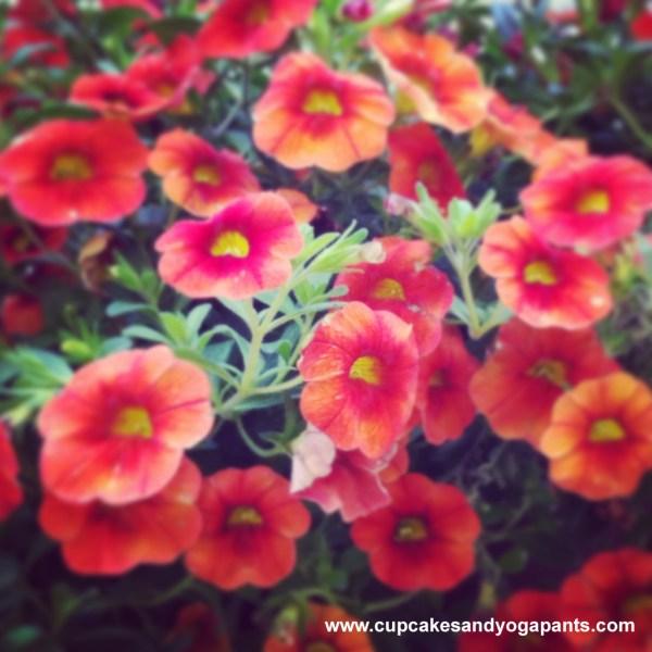 flowers_petunias