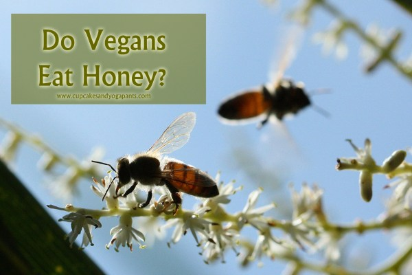 Do Vegans Eat Honey?