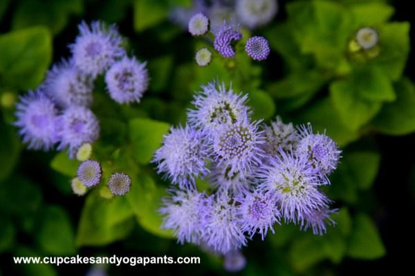 Backyard Summer Flowers