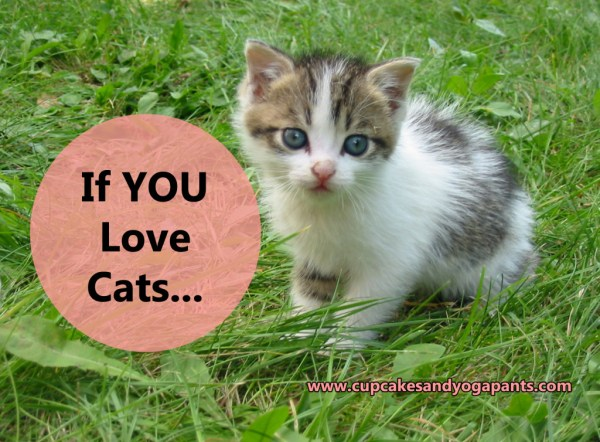 If You Love Cats...