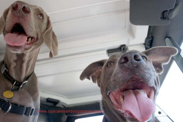 Belle and Orion in the Jeep