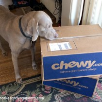 dog snifffing delivery boxes