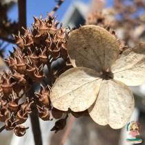 The Winter Blossom