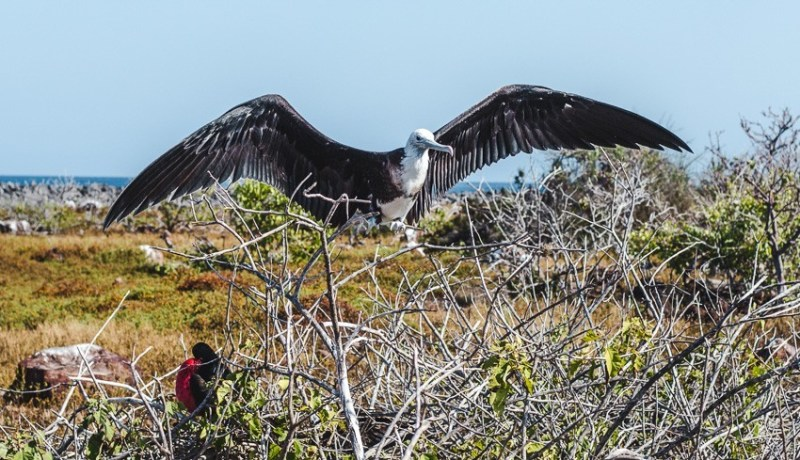 galapagos islands birdwatching sailboat best places to visit in ecuador backpacking