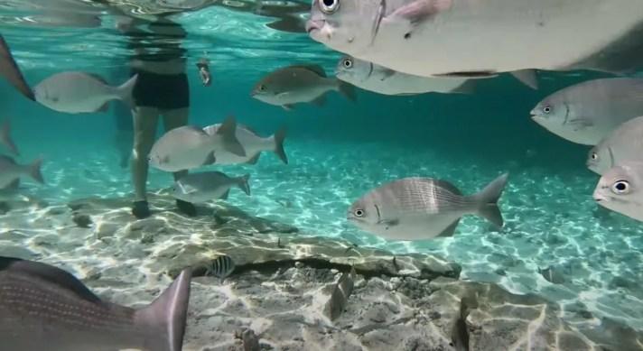 isla san andres colombia acuario