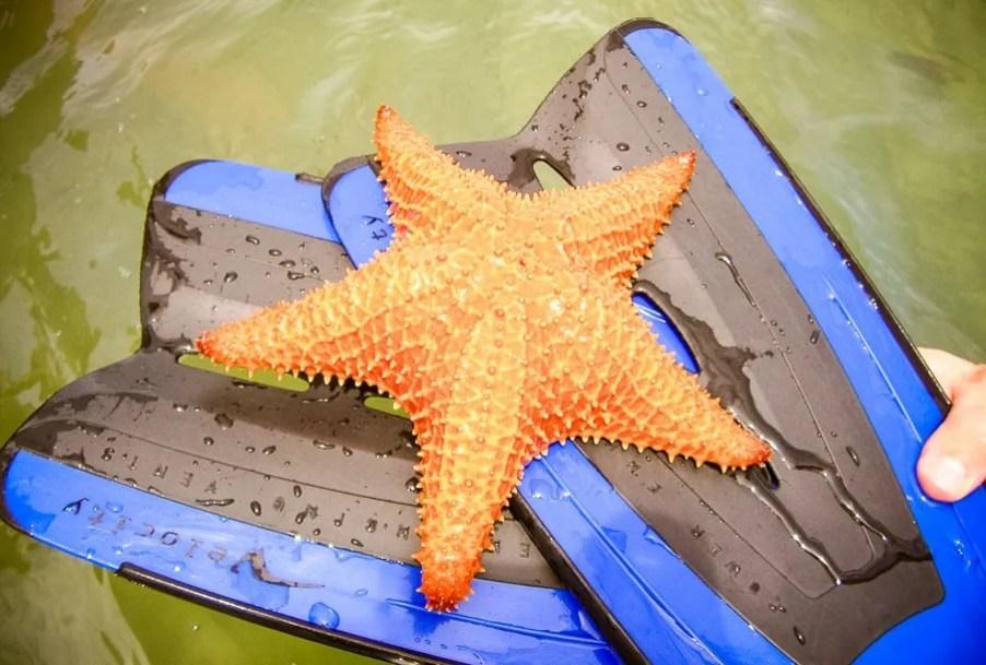best central american beaches: starfish beach bocas del toro panama