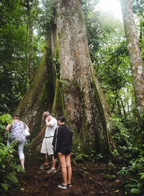 la fortuna rainforest hike tour: 2 weeks in costa rica