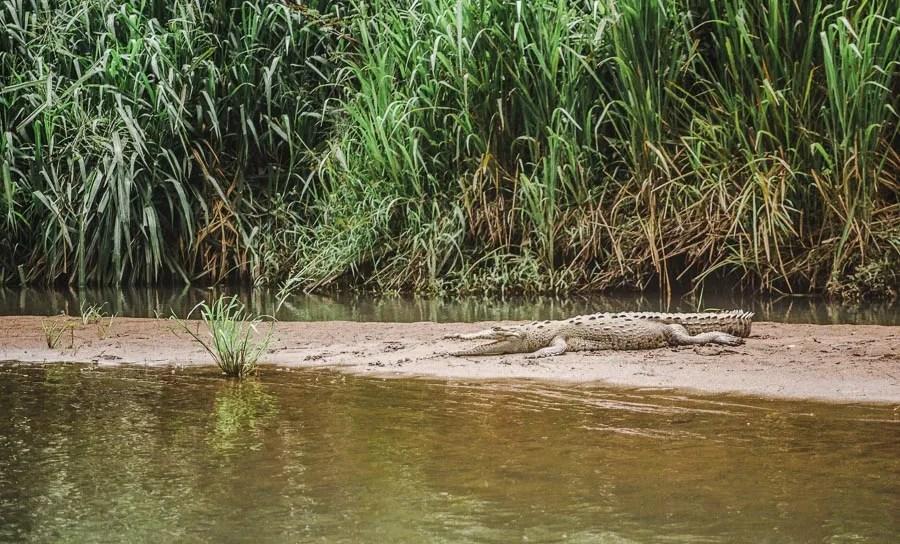 sleeping crocodile in corvocado national park - famous landmarks in costa rica