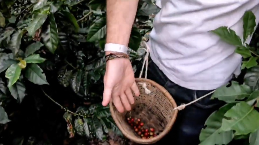 Salento coffee tours: Reviewing 3 of travellers' fave Colombian coffee fincas