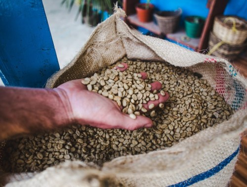 salento coffee tours colombia fincas review
