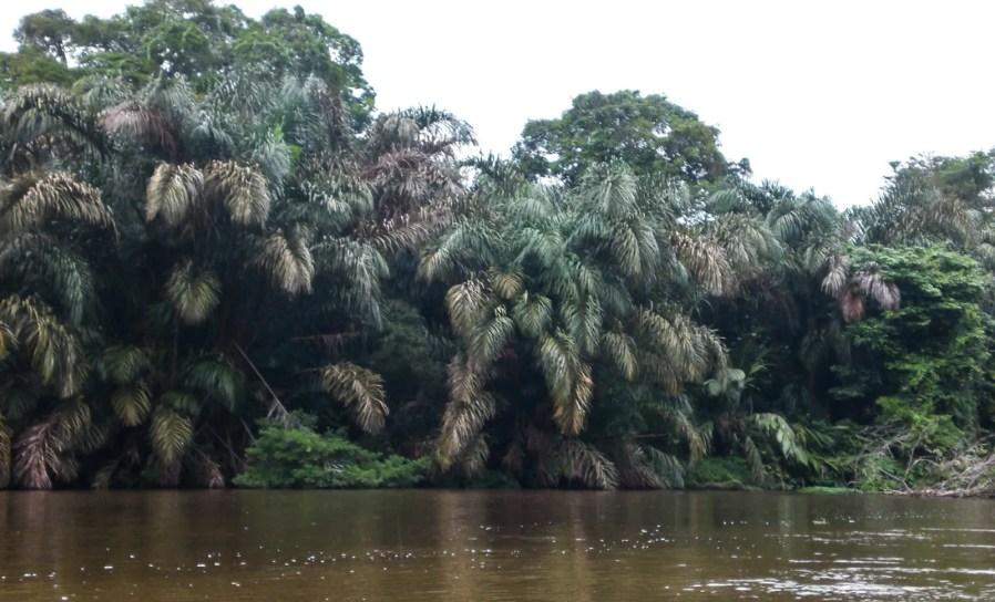 tortuguero river boat cruise - famous landmarks in costa rica