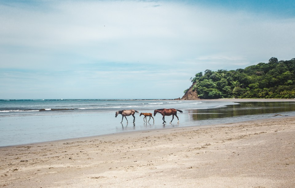 Wild horses on beach in Sámara: 11 things to know about costa rica pura vida