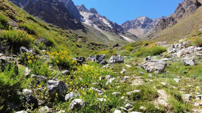 Región Metropolitana: Gobierno propone crear parque nacional con sólo 26% de las 142.000 hectáreas públicas disponibles