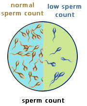 low sperm count remedy