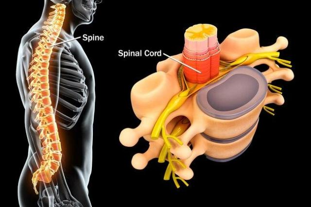 spinal cord treatment