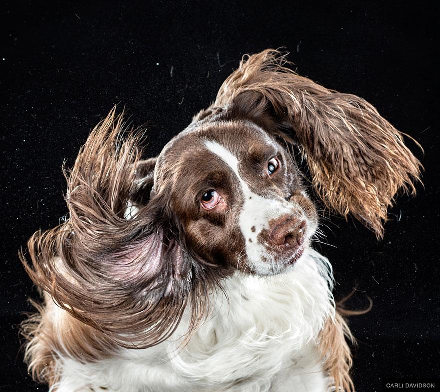 curators of quirk, reilly rebello, melissande rebello, carli davidson, shake dogs, dog photography, pet photography, pet photography ideas, pet photography tips