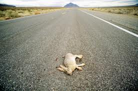 Jack rabbit dead