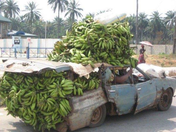 africa bananas 3023044k