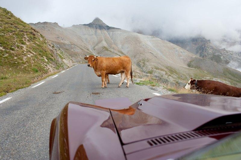 CC Video: An Alpine Road Trip In A Vintage Big Block