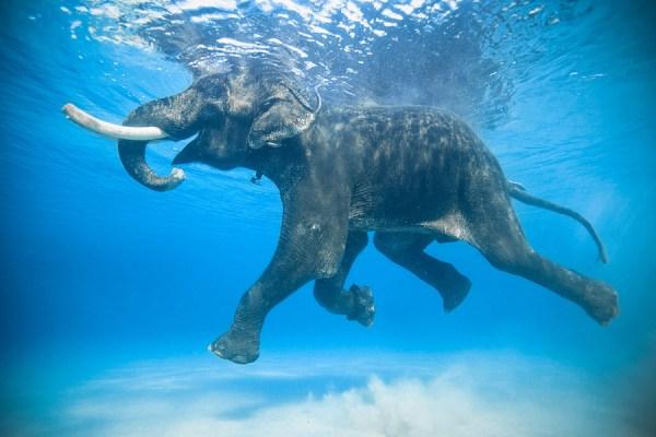 wet elephant