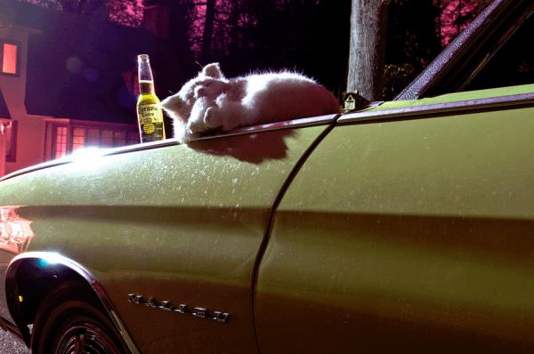 CP 1970 malibu cat on hood