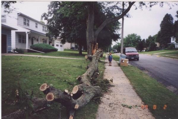 Tree Marcus Aerostar 001