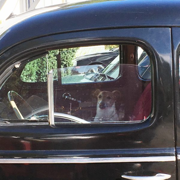 pup-in-coupe-1